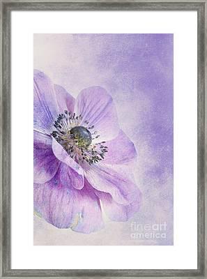 Anemone Framed Print by Priska Wettstein