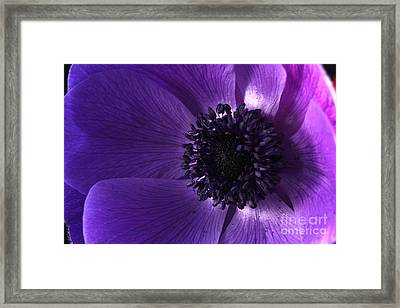 Anemone Framed Print by Rebeka Dove