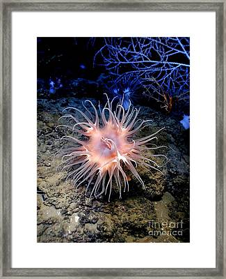 Framed Print featuring the photograph Anemone Sea Life Sea Ocean Water Underwater by Paul Fearn