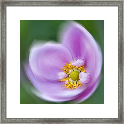 Anemone Swirl Framed Print
