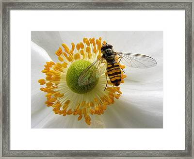 Anemone With Visitor Framed Print