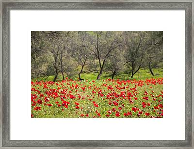 At Ruchama Forest Israel Framed Print