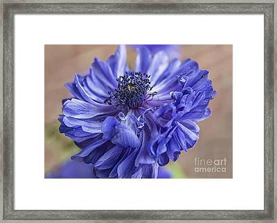 Anemone Blues I Framed Print