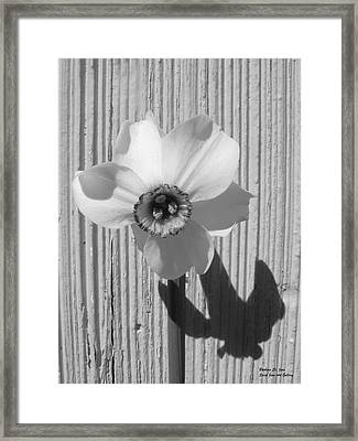 Angel Eyes Narcissus Framed Print