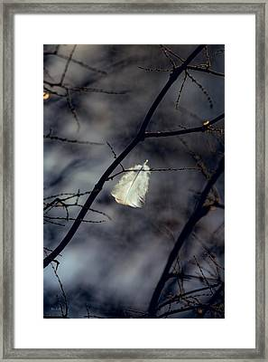 Angel Feather Framed Print