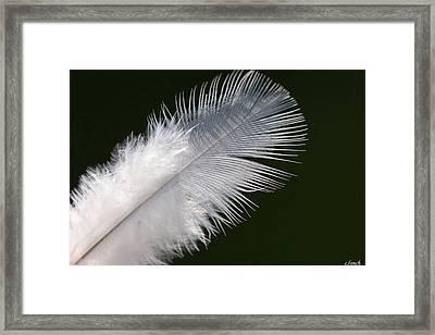 Angel Feather Framed Print by Carol Lynch