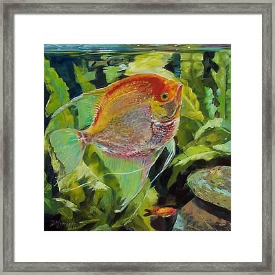 Angel Fish Framed Print by Donna Munsch