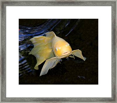 Framed Print featuring the photograph Angel Koi by Mariarosa Rockefeller