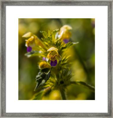 Framed Print featuring the photograph Angel? by Leif Sohlman