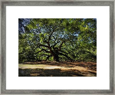 Angel Oak 001 Framed Print