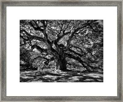 Angel Oak 002 Framed Print