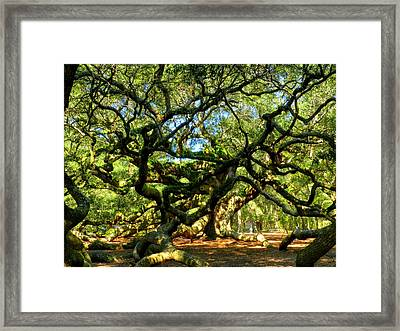 Angel Oak 006 Framed Print by Lance Vaughn