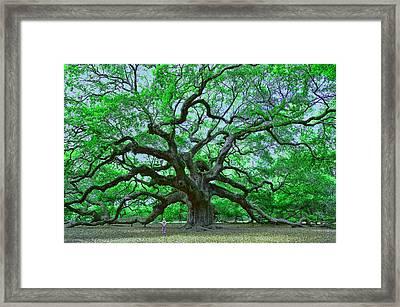 Angel Oak Framed Print by Allen Beatty