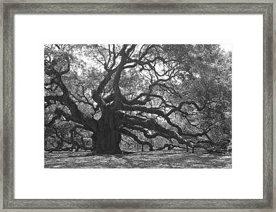 Angel Oak II - Black And White Framed Print