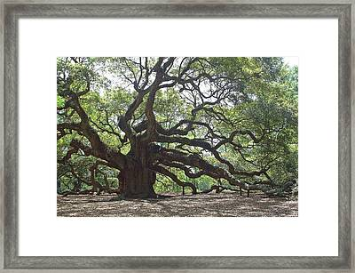 Angel Oak II Framed Print