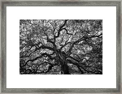 Angel Oak Framed Print by Renee Sullivan