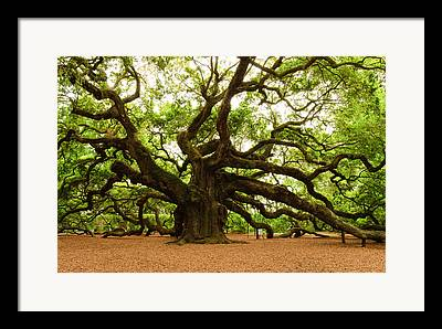 Live Oaks Digital Art Framed Prints