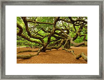 Angel Oak Tree Branches Framed Print by Louis Dallara