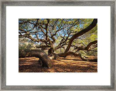 Angel Oak Tree Charleston Sc Framed Print by Dave Allen