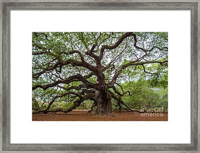 Angel Oak Tree Framed Print by Dale Powell