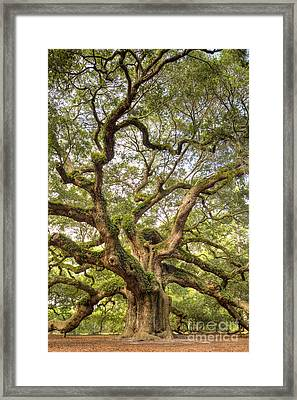 Angel Oak Tree Johns Island Sc Framed Print by Dustin K Ryan