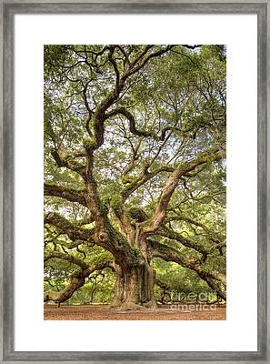 Angel Oak Tree Johns Island Sc Framed Print