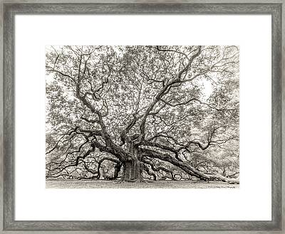 Angel Oak Tree Framed Print by Kathy Ponce