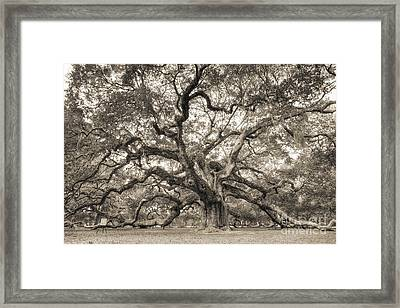 Angel Oak Tree Of Life Sepia Framed Print