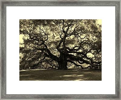 Angel Oak Tree Sepia Framed Print by Susanne Van Hulst