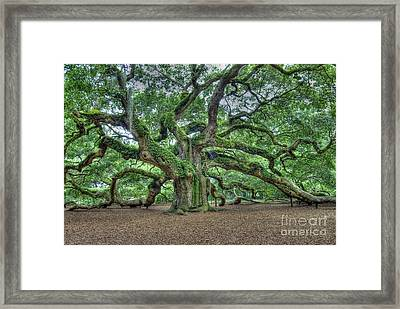 Angel Oak Framed Print
