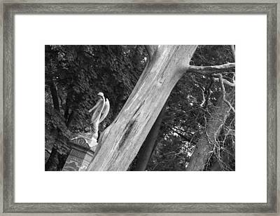 Framed Print featuring the photograph Angel by Steven Macanka