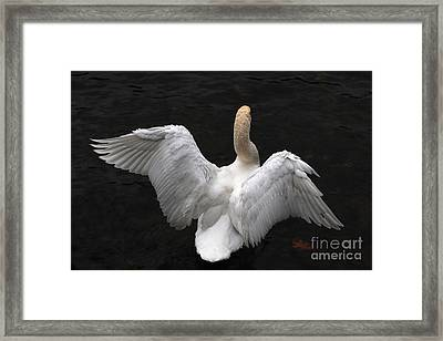 Angel Swan Framed Print