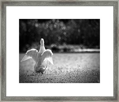 Angel Unaware Framed Print by Kimberly Danner