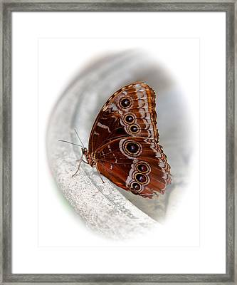 Angelic Wings Framed Print