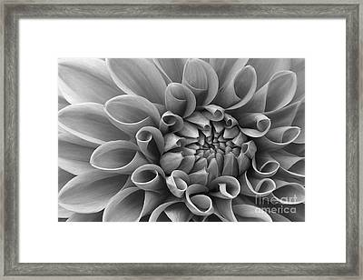 Angelini Photography Framed Print by Mary Angelini