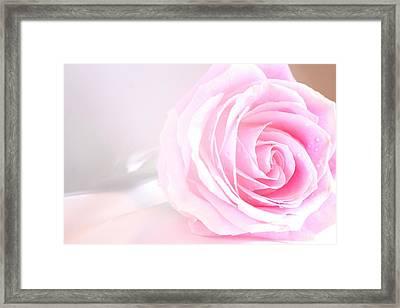 Angel's Love Rose Framed Print by The Art Of Marilyn Ridoutt-Greene