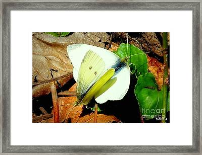 Angels Of The Morning Framed Print by Tami Quigley
