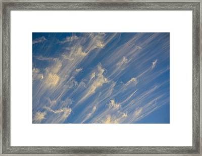 Angels Trumpets Framed Print