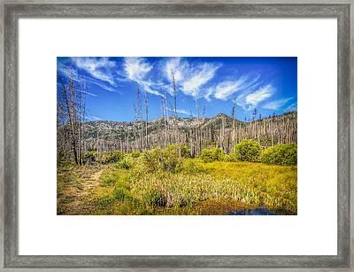 Angora Creek Restoration Framed Print