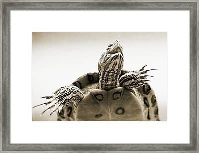 Angry And Strong Framed Print by Yevgeni Kacnelson
