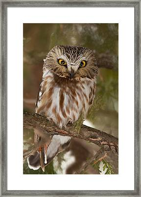 Angry Bird Framed Print by Mircea Costina Photography