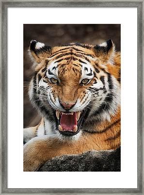 Angry Cat Framed Print by Emmanuel Panagiotakis