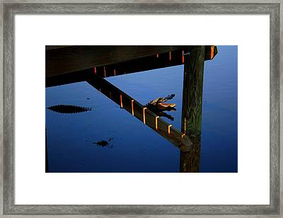 Angry Gator Framed Print by Miles Stites