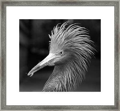 Angry Framed Print