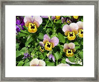 Angry Petals Framed Print