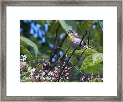 Angry Warbler Framed Print