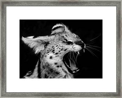 Angry Wild Serval Cat Framed Print by Kathy Kay