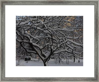 Angular Tree With Snow Framed Print by Winifred Butler