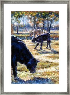 Angus Calves Out With Dad Framed Print by Denise Horne-Kaplan
