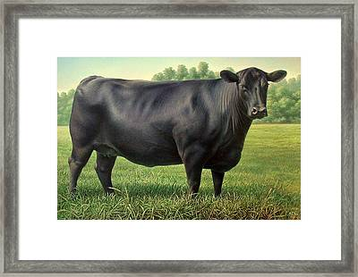 Angus Cow 182m 1 2007 Framed Print